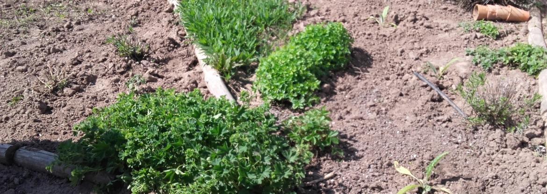 """LLU Mūžizglītības centrs piedāvā kursu """"Netradicionālo augu audzēšana,  ārstniecības augi"""""""