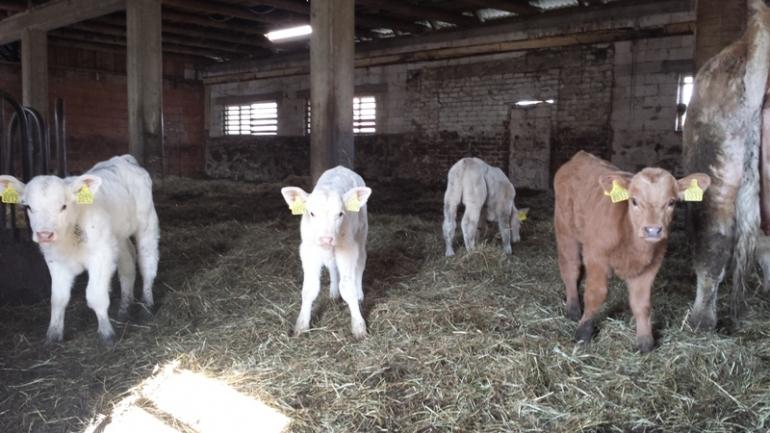 Diskusija par gaļas nozares attīstību un dzīvotspējību