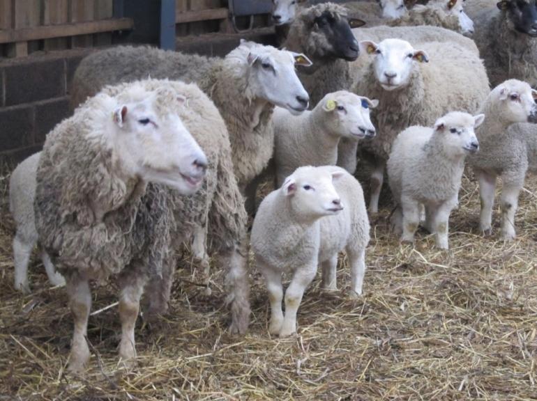 Seminārs aitkopjiem